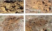 Living Soil Progression in 2014
